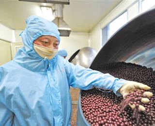 """創新發展中的西藏藏醫藥產業:""""藥香""""芬芳 歷久彌新"""